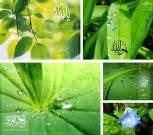 vista-green-islamic-wallpapers