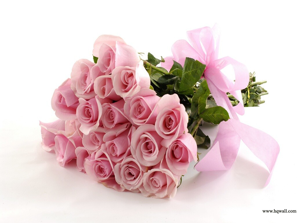 Beautiful flower hd apni link - Pink roses background hd ...