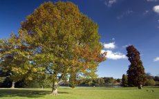 autumn-trees-clumber